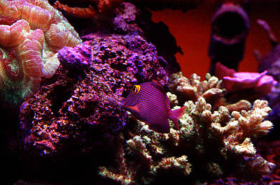 Colors Of Underwater Life Print by Clayton Bruster