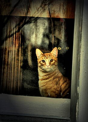 Orange Tabby Photograph - Eyes Behind by Emily Stauring