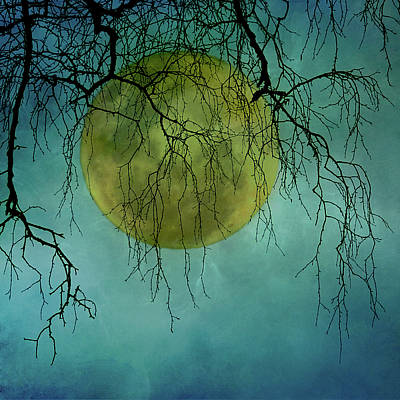 Bare Tree Photograph - Full Moon by Jill Ferry