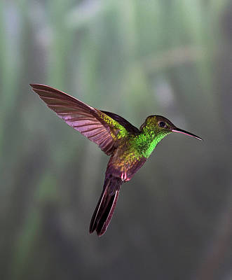 Multi Colored Photograph - Hummingbird by David Tipling