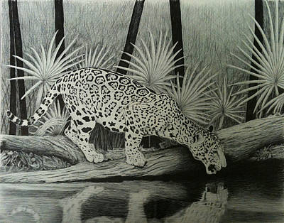 Rainforest Drawing - Jaguar In The Rainforest by Reppard Powers