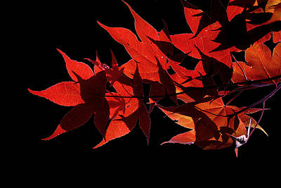 Minimal Photograph - Leaves Of Red by Heather Applegate