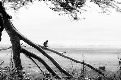 Loud Photograph - Monkey Alone On A Branch by Darcy Michaelchuk