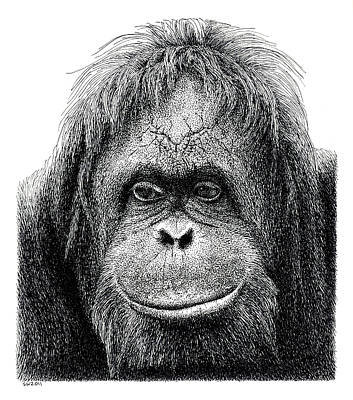 Orangutan Drawing - Orangutan by Scott Woyak