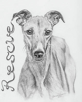 Rescued Greyhound Drawing - Petunia by Teresa Vecere