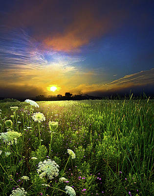 Love Laces Photograph - Scuppernong by Phil Koch