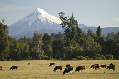 Dairy Farming Photograph - Snow-capped Osorno Volcano by Abraham Nowitz