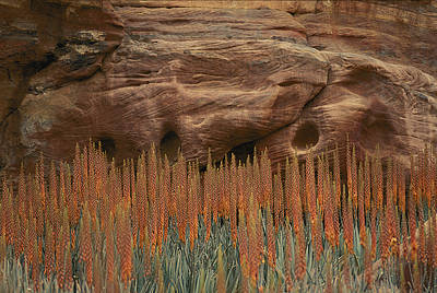 Wildflowers In The Desert Land Of Petra Print by Annie Griffiths