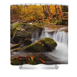Autumn Forest Shower Curtain by Evgeni Dinev