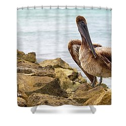 Brown Pelican Shower Curtain by Sebastian Musial