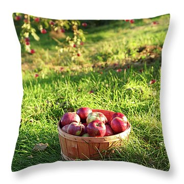 Freshly Picked Apples In The Orchard  Throw Pillow by Sandra Cunningham