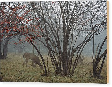A White-tailed Deer Forages Wood Print by Raymond Gehman