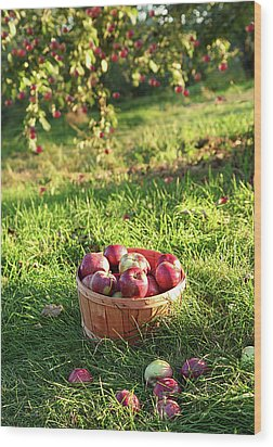 Freshly Picked Apples In The Orchard  Wood Print by Sandra Cunningham