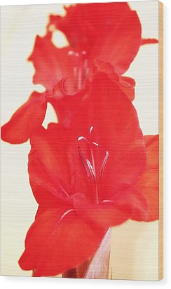 Gladiola Stem Wood Print by Cathie Tyler