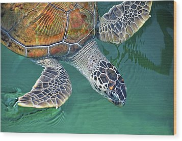Sea Turtle Wood Print by Thank you.
