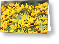 Leader Of The Pack Greeting Card by Becky Lodes