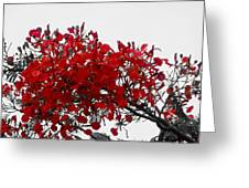Bright Red Tropical Flowers Greeting Card by Mira Dimitrijevic