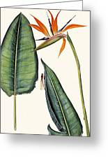 Dragonfly And Strelitzia - Th09 Greeting Card by Tobias Hodson