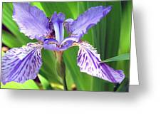 Iris 3 Greeting Card by Joy Neasley