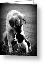 Puppies Greeting Card by Susie Weaver