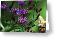 Purple Flowers And The Flirtatious Moth Greeting Card by Anahi DeCanio
