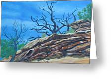 Sticks And Stones Greeting Card by Melody Perez