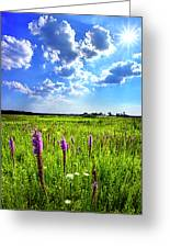 Summer Day Greeting Card by Phil Koch