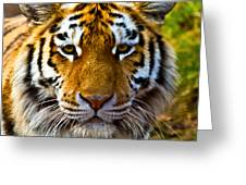 Tiger Greeting Card by Gert Lavsen