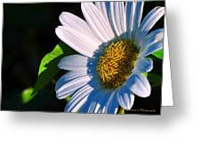 White Daisy Greeting Card by William Lallemand