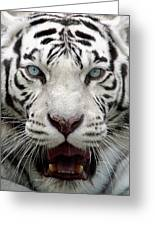 White Tiger Portrait Close Up Greeting Card by Andrey Ushakov