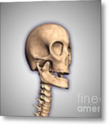 Conceptual Image Of Human Skull Metal Print by Stocktrek Images