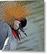 Crowned Crane Metal Print by Skip Willits