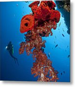 Diver Looks On At A Bright Red Soft Metal Print by Steve Jones