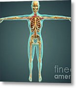 Human Body Showing Skeletal System Metal Print by Stocktrek Images