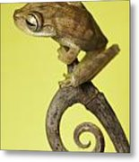 Tree Frog On Twig In Background Copyspace Metal Print by Dirk Ercken