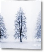 Winter Trees In Fog Metal Print by Elena Elisseeva
