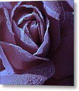 A Rose That Glitters Metal Print by Michelle Ayn Potter