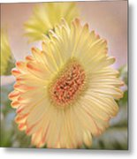 A Touch Of Sunshine Metal Print by Fiona Messenger