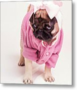 Adorable Pug Puppy In Pink Bow And Sweater Metal Print by Edward Fielding