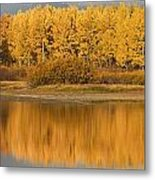 Autumn Aspens Reflected In Snake River Metal Print by David Ponton