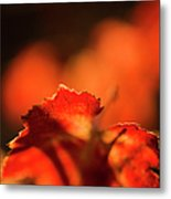 Autumn Grape Leaf Macro Metal Print by Charmian Vistaunet