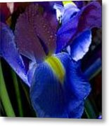 Blue Iris Metal Print by Joann Vitali