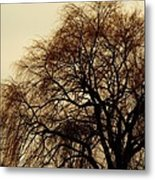 Burlington Willow Metal Print by Todd Sherlock