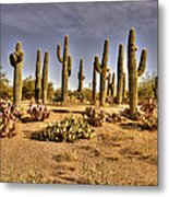 Cactus Patch Metal Print by George Lenz