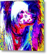 Chinese Crested Dog 20130125v1 Metal Print by Wingsdomain Art and Photography
