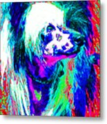 Chinese Crested Dog 20130125v3 Metal Print by Wingsdomain Art and Photography