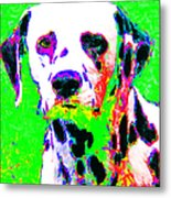 Dalmation Dog 20130125v3 Metal Print by Wingsdomain Art and Photography