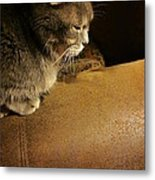 Dear Lucy Metal Print by Guy Ricketts