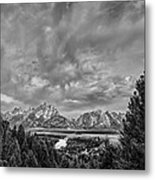 Gray Treetons Metal Print by Jon Glaser