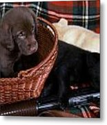 Hunters Puppy Dreams Metal Print by Skip Willits